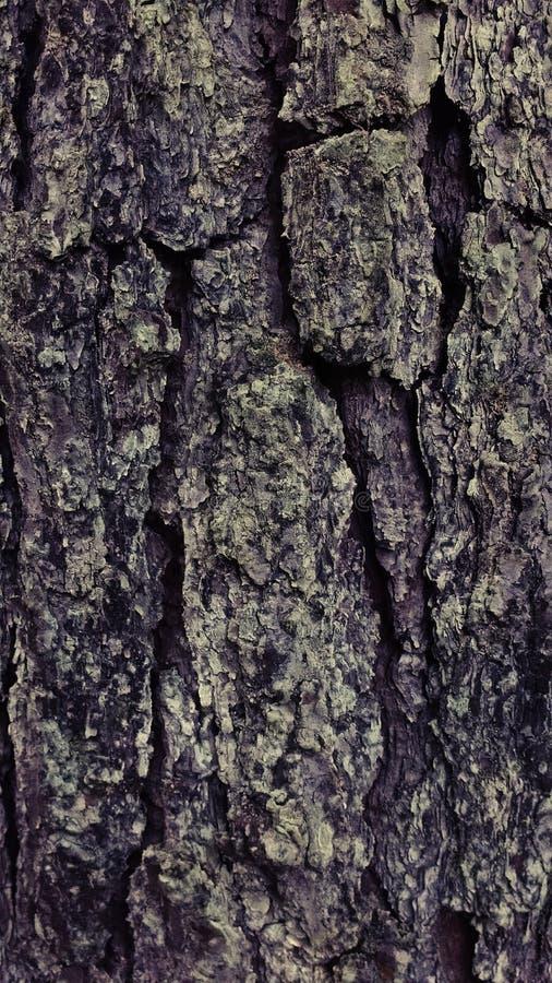 A árvore a mais velha fotografia de stock royalty free