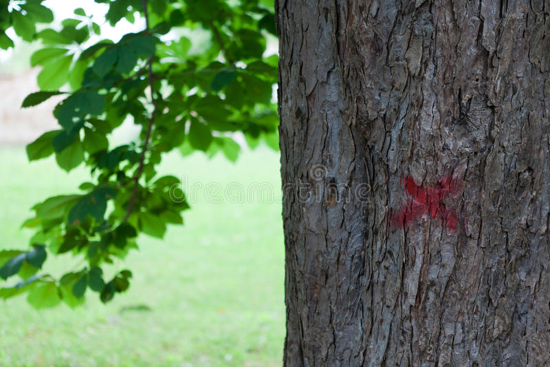 Árvore marcada fotografia de stock