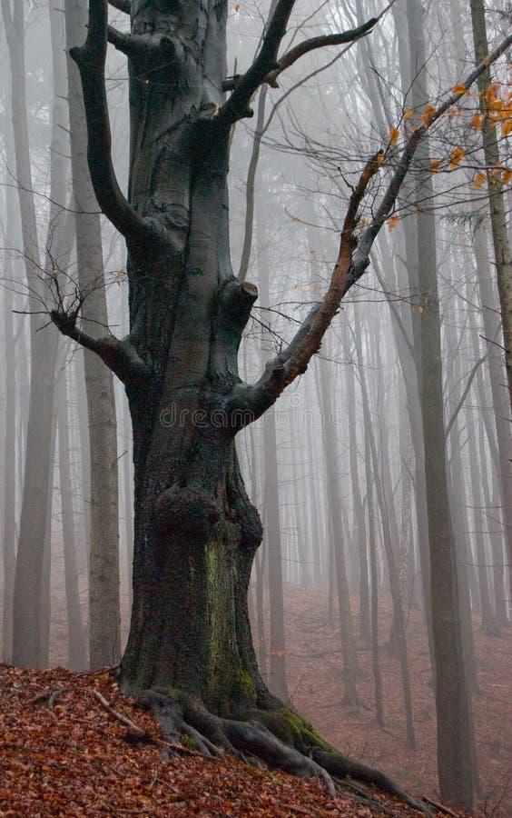 Árvore mestra imagem de stock royalty free