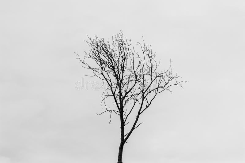 Árvore minimalista imagem de stock royalty free