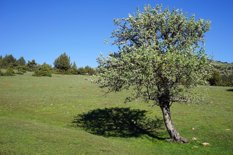 A árvore molda uma sombra fotografia de stock