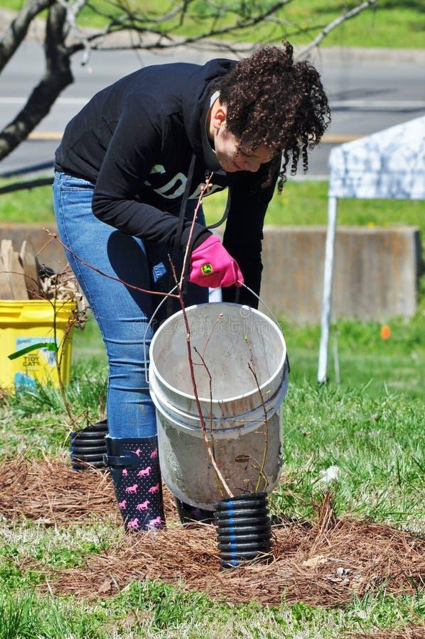 Árvore molhando voluntária durante a plantação do projeto ribeirinho da restauração foto de stock royalty free
