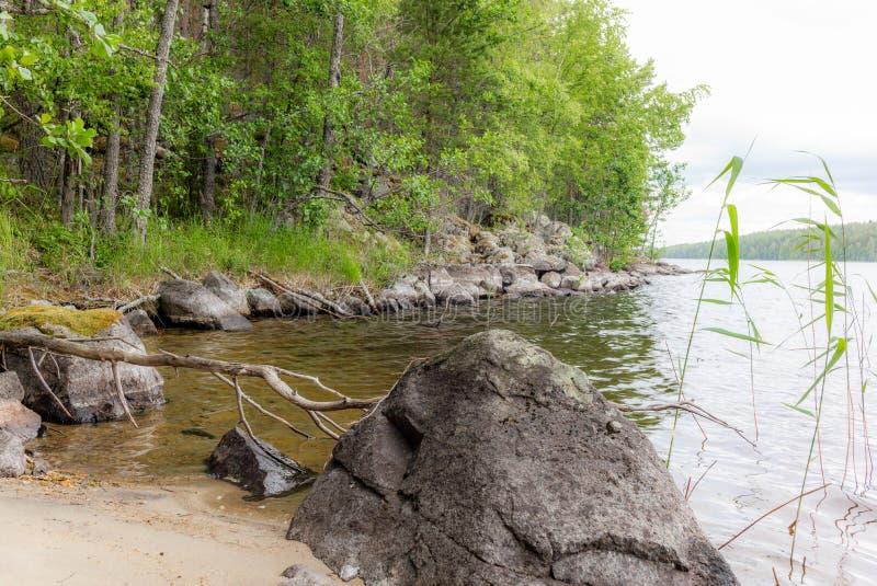 Árvore morta na beira do lago de Saima no Parque Nacional de Linnansaari, na Finlândia - 2 imagens de stock