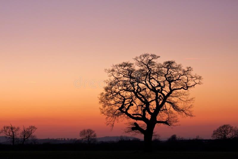 Árvore mostrada em silhueta em um campo no por do sol imagem de stock