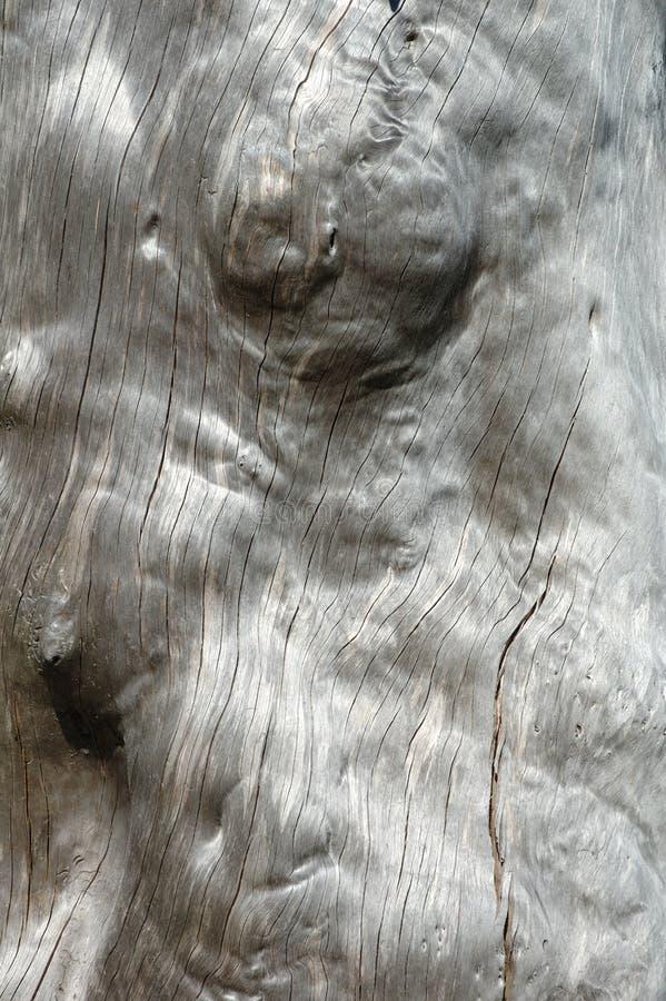 Árvore Murcho - Fundo Imagem de Stock