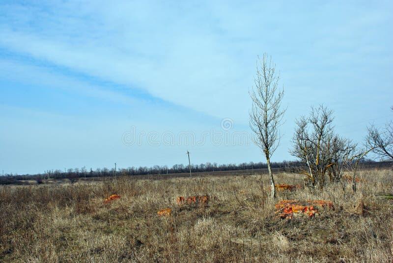 Árvore murcho no gramado com grama seca e as peças quebradas das paredes de tijolos vermelhos, linha de árvores e campo arado da  fotografia de stock