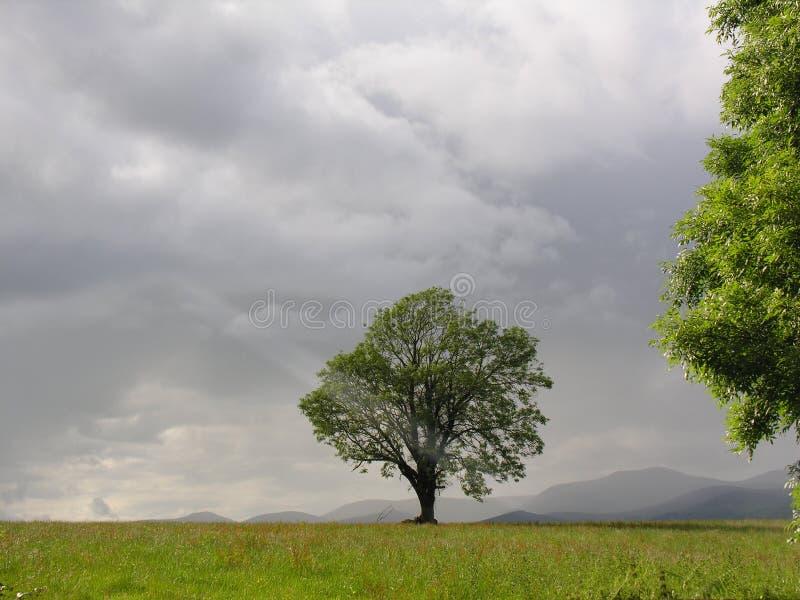 Árvore Mystical imagens de stock