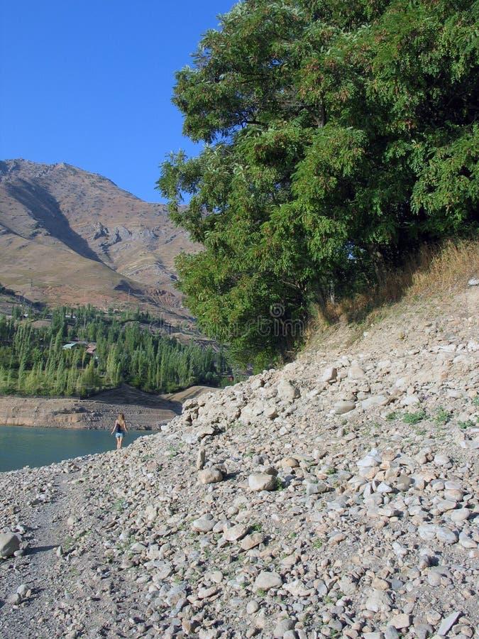 Árvore na beira do lago foto de stock royalty free
