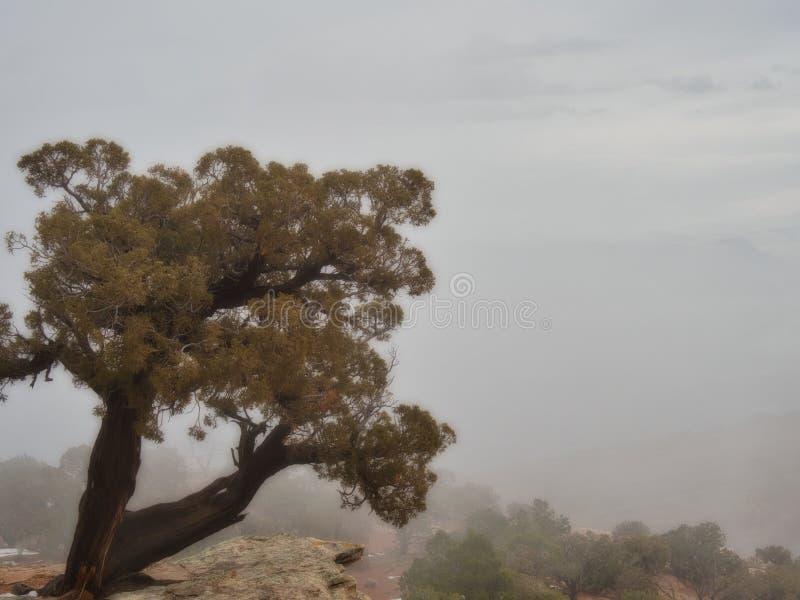 Árvore na borda do penhasco imagem de stock