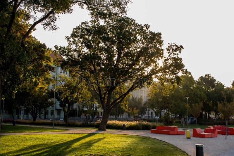 Árvore na cidade foto de stock royalty free