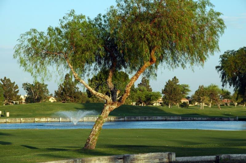 Árvore na corte do golfe fotos de stock