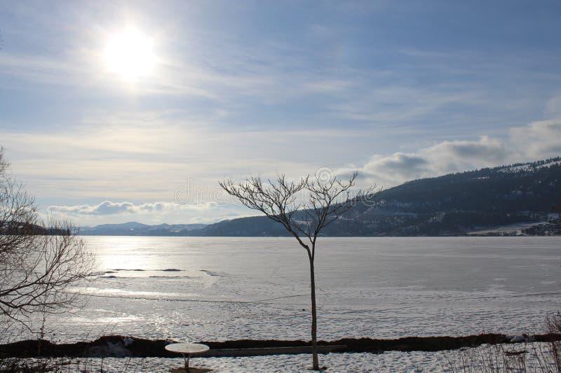 árvore na costa do lago do inverno e sol que brilha no lago congelado fotos de stock
