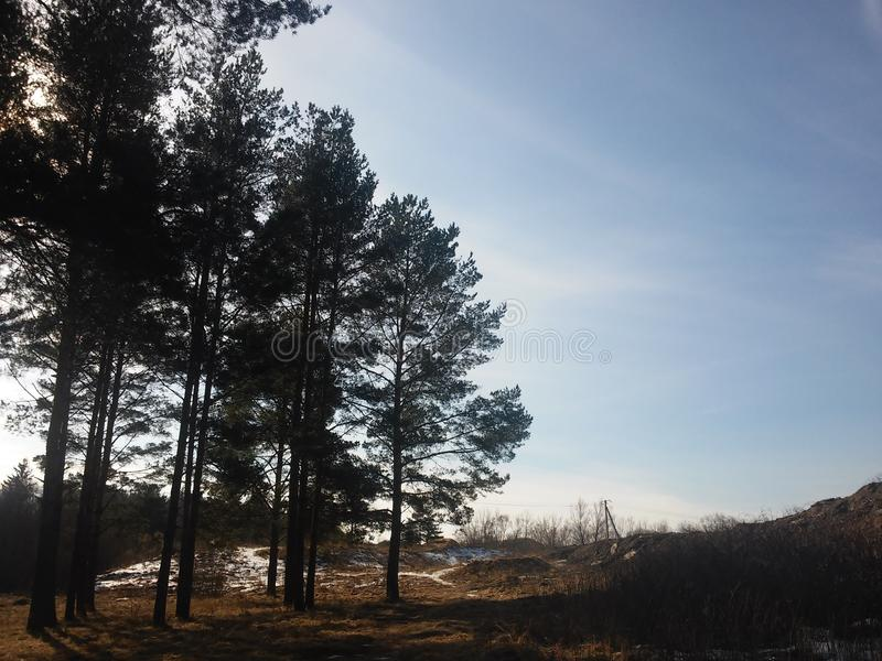 Árvore na floresta foto de stock