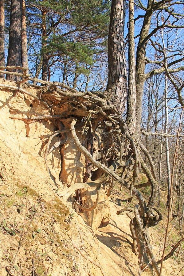Árvore na inclinação seca imagens de stock