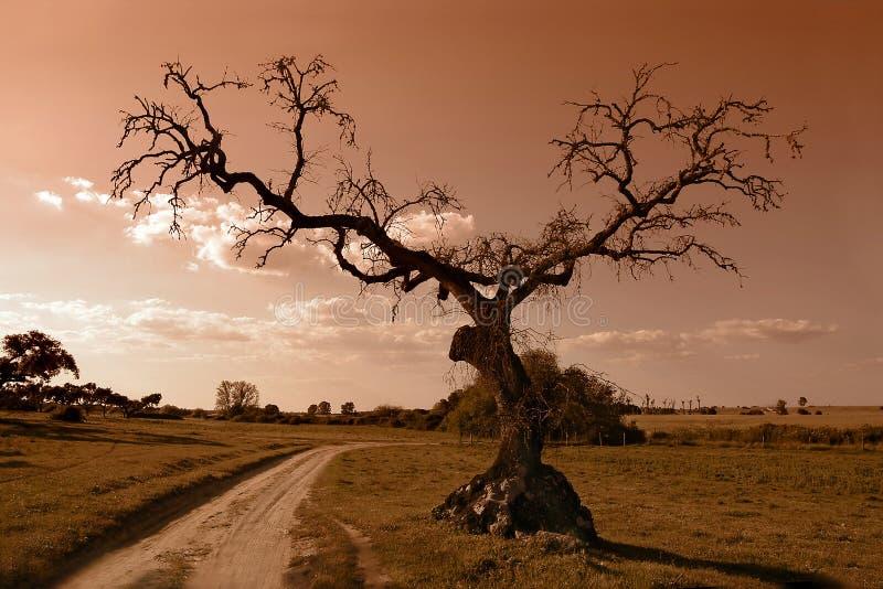 Árvore na maneira foto de stock royalty free