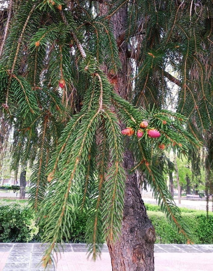 Árvore na mola com frutos foto de stock royalty free