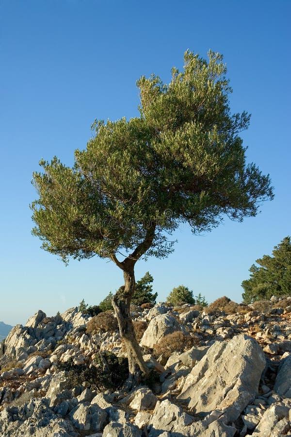 Árvore na montanha imagens de stock