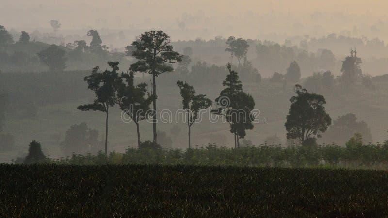Árvore na montanha fotos de stock royalty free