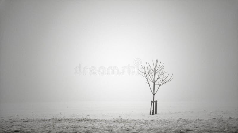Árvore na névoa imagens de stock royalty free
