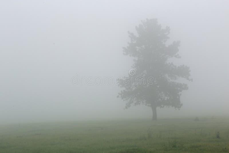 Árvore na névoa em Custer State Park em South Dakota foto de stock royalty free