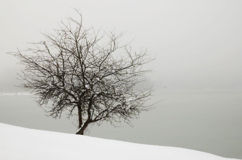 Árvore na névoa pelo lago coberto com a neve fotos de stock royalty free