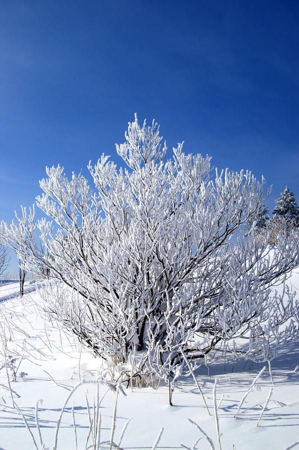 Árvore na neve imagem de stock royalty free