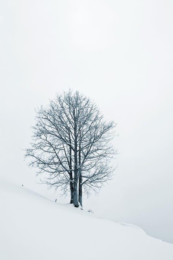 Árvore na neve fotos de stock royalty free