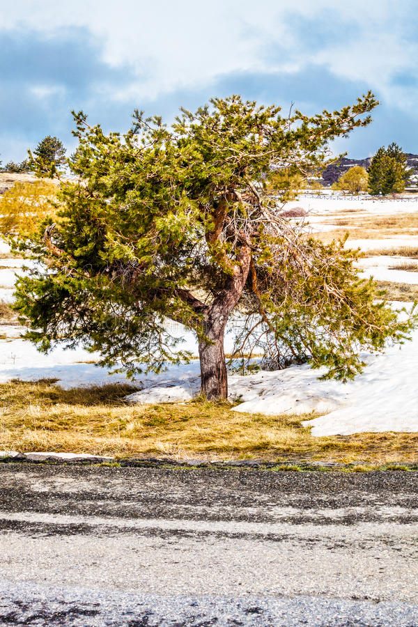 Árvore na paisagem do inverno fotos de stock