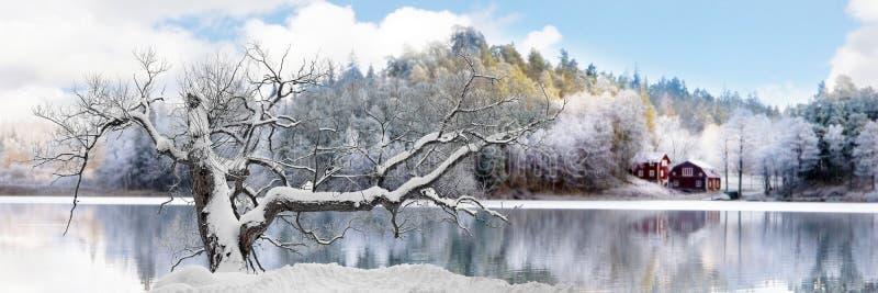 Árvore na paisagem do inverno fotografia de stock
