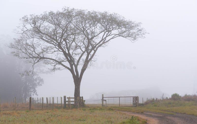 A árvore na porta da exploração agrícola e na névoa foto de stock royalty free