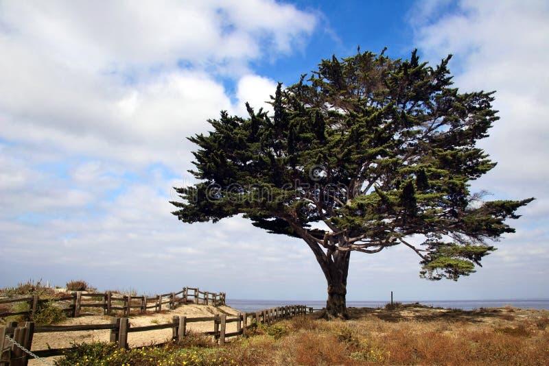 Árvore na praia imagem de stock