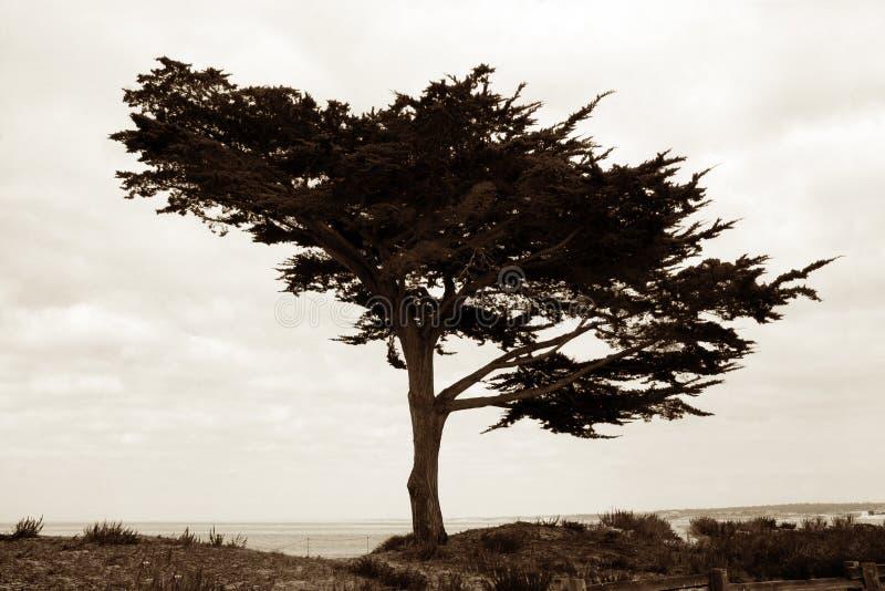 Árvore na praia fotografia de stock