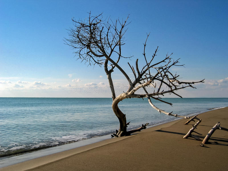 Árvore na praia - Mar-árvore fotografia de stock