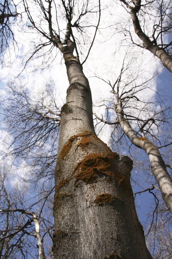Árvore na queda imagens de stock