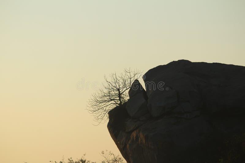 Árvore na rocha fotografia de stock