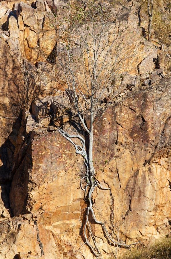 Árvore na rocha imagens de stock