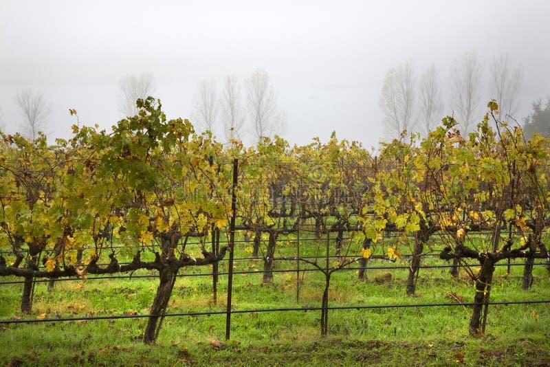 Árvore Napa Califórnia da névoa dos vinhedos fotos de stock