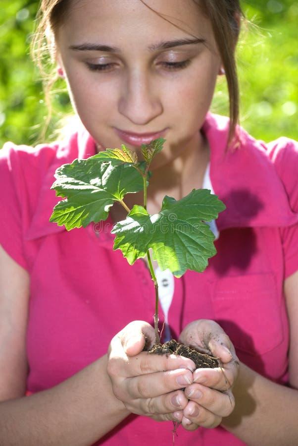 Árvore Nas Mãos Fotografia de Stock