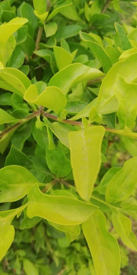 Árvore natural imagens de stock royalty free