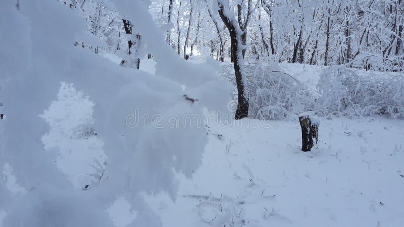 Árvore, natural, inverno, neve, frio, temas, nivelando imagens de stock