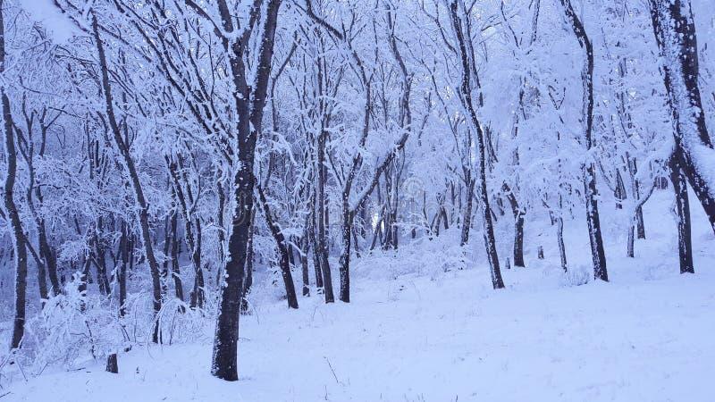 Árvore, natural, inverno, neve, frio, temas, nivelando foto de stock