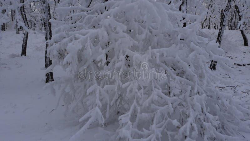 Árvore, natural, inverno, neve, frio, temas, nivelando foto de stock royalty free