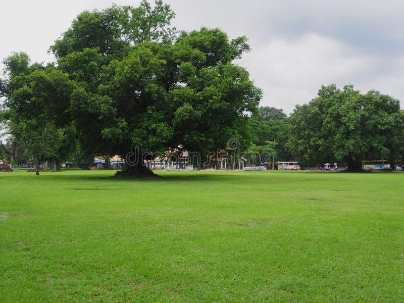 Árvore natural verde no fundo do parque imagem de stock royalty free