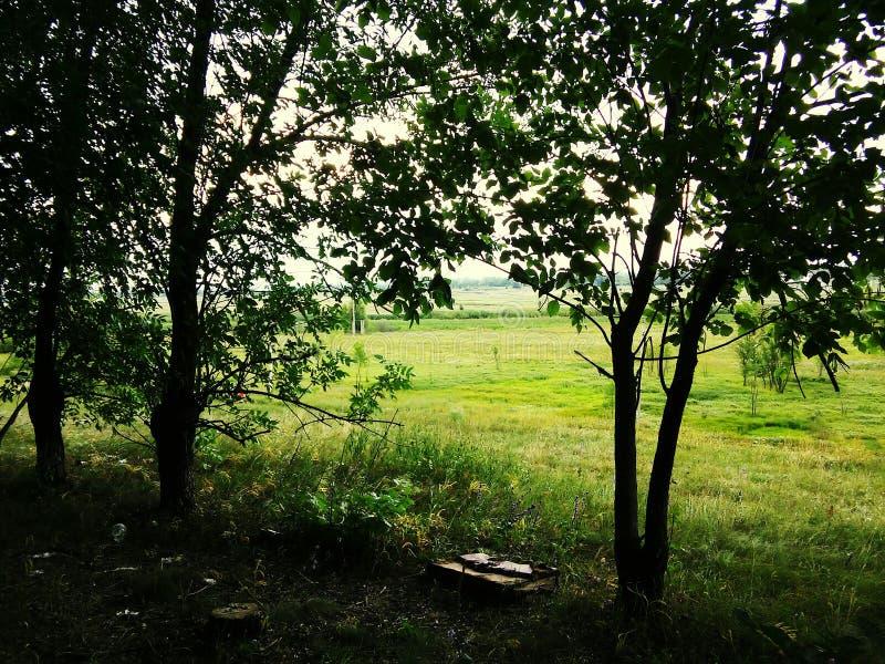 Árvore nave Verde beleza Beleza do jardim da natureza imagem de stock royalty free