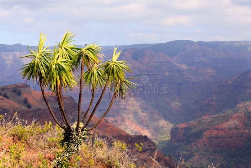 A árvore negligencia a garganta de Waimea fotografia de stock