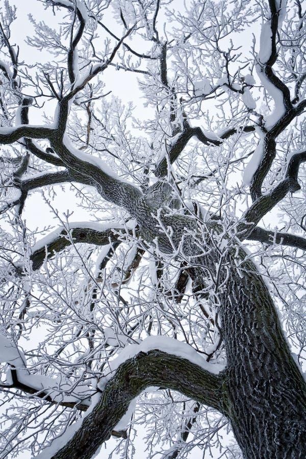 Árvore nevada foto de stock
