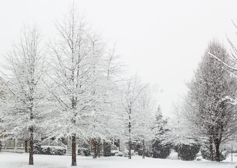 Árvore nevando fotos de stock