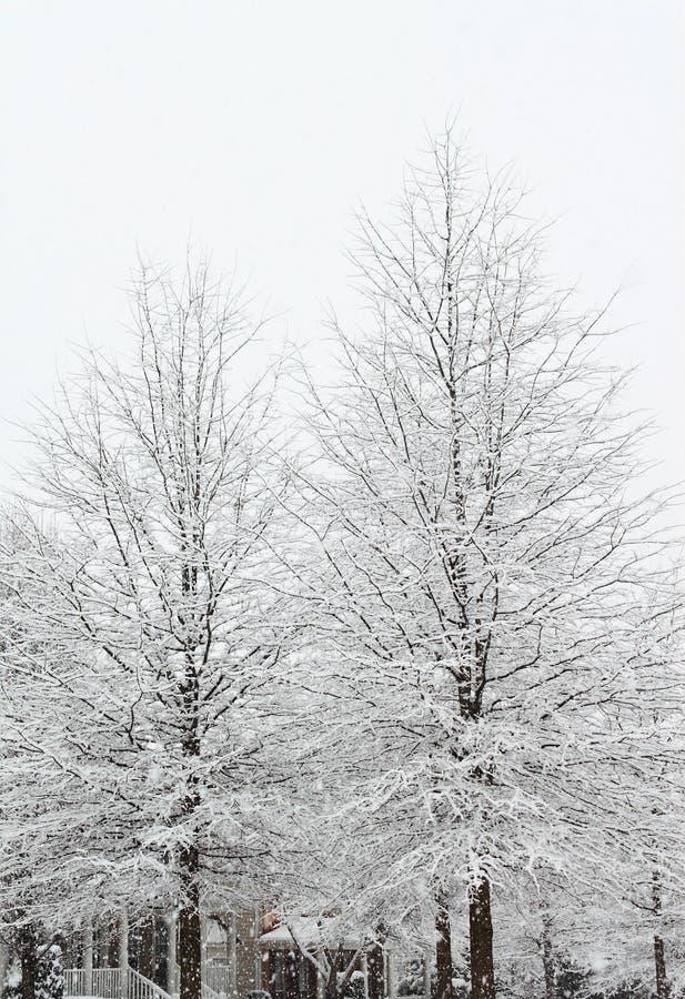 Árvore nevando fotografia de stock