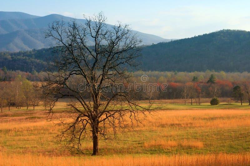 Download Árvore no campo foto de stock. Imagem de grande, naturalizado - 125356