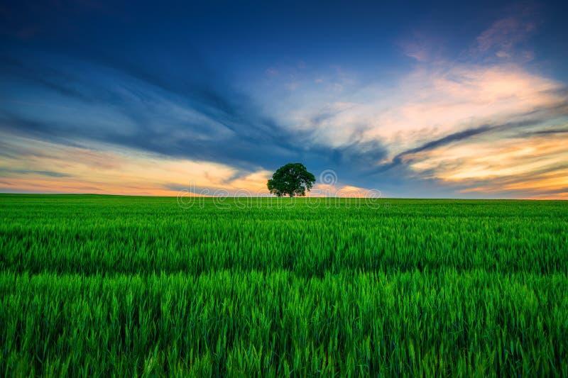 Árvore no campo e nuvens dramáticas no céu foto de stock royalty free